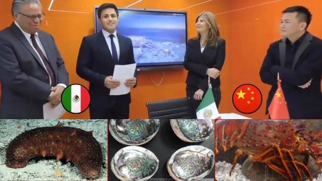 abre FEDECOOP oficina en shanghai embajada de mexico en china