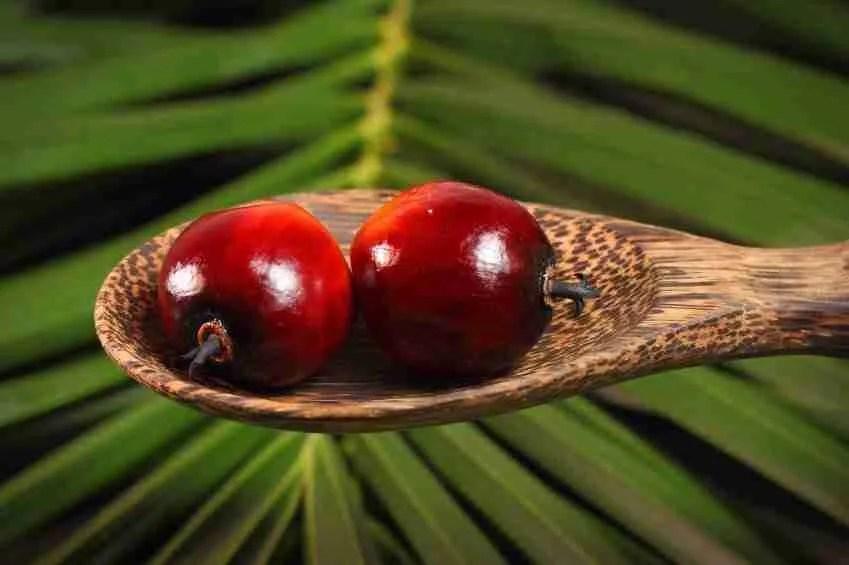 L'olio di palma fa male alla salute. Ecco i lavori scientifici che lo dimostrano. Il silenzio imbarazzato del Ministero salute, delle aziende e dell'Inran (Cra-Nut)