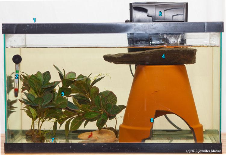Simple Axolotl aquarium tank