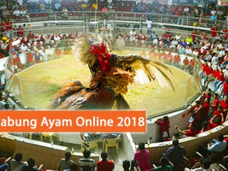 Link Alternatif Sabung Ayam 2018