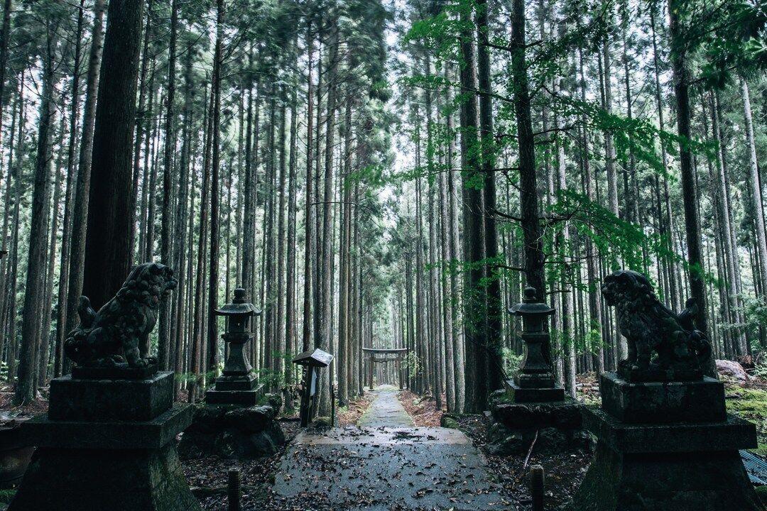 【海外】「なんて神秘的なんだ・・」まるで異世界への入り口のような京都の穴場スポットに海外も感動!