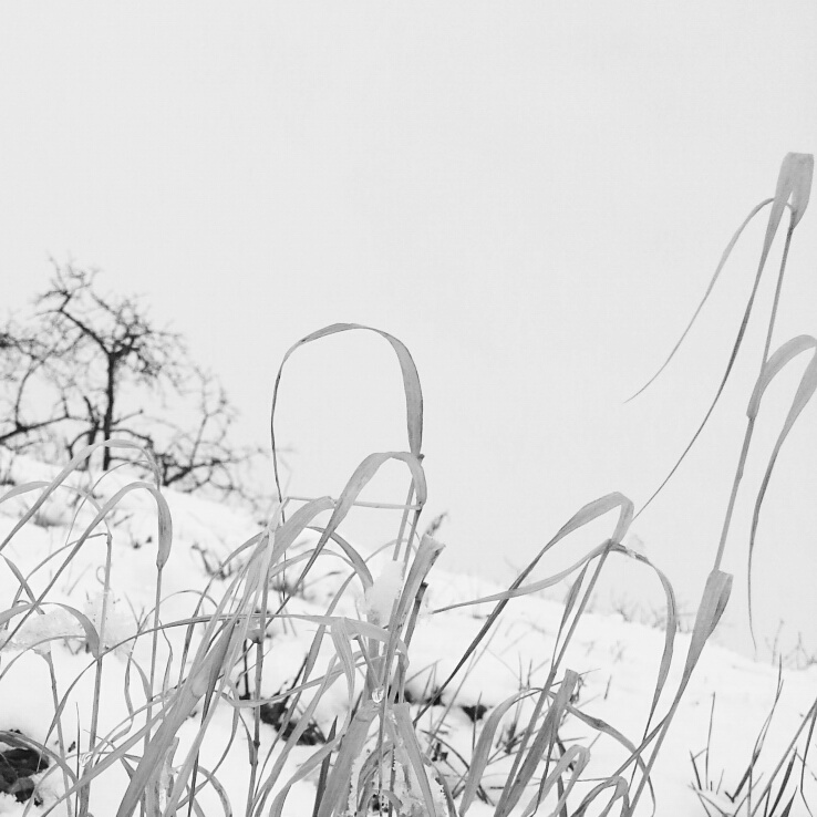 Winter in shades of grey