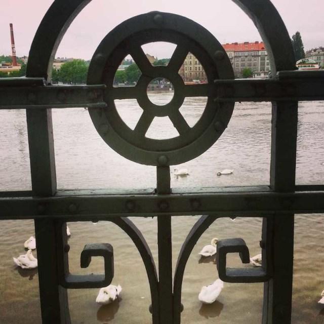 RadkaZimovaK_Vltava_swans
