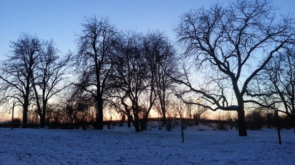 Trees against the sunset at Vysehrad