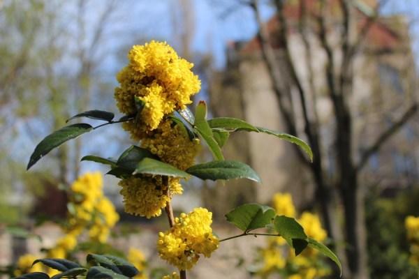BotanicGarden_Karlove_Spring_in_bloom