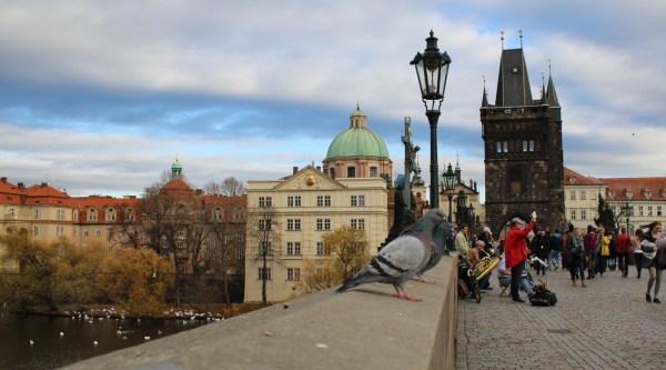 CharlesBridge_OldTownBridge_Prague_Pigeons__RadkaZKing