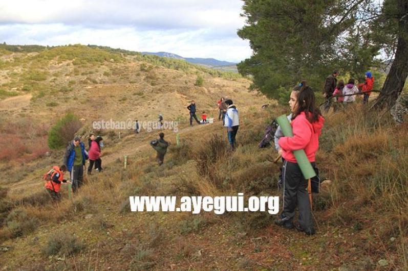dia_del_arbol_2015-Galerias-Ayuntamiento-de-Ayegui (1)