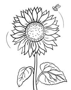 Terbaik 55+ Sketsa Gambar Kartun Bunga