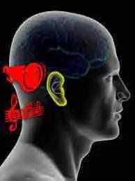 Oímos con los Oídos o con el Cerebro?