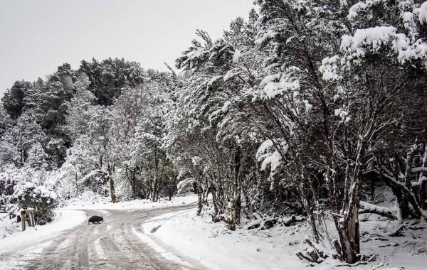 wombat the snow