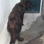 Perro perdido (1)