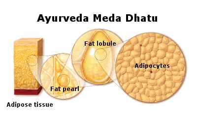 L'ayurveda in pillole – Dosha, Dhatu e Mala