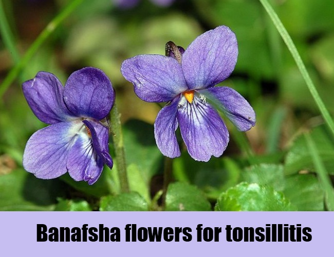 Banafsha Flowers For Tonsillitis