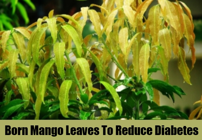 Born Mango Leaves To Reduce Diabetes