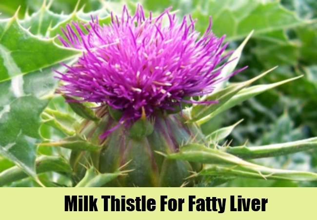 Milk Thistle For Fatty Liver