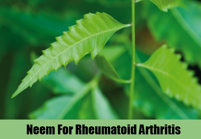 Neem For Rheumatoid Arthritis