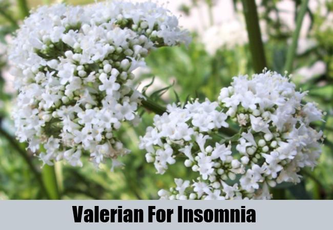 Valerian For Insomnia