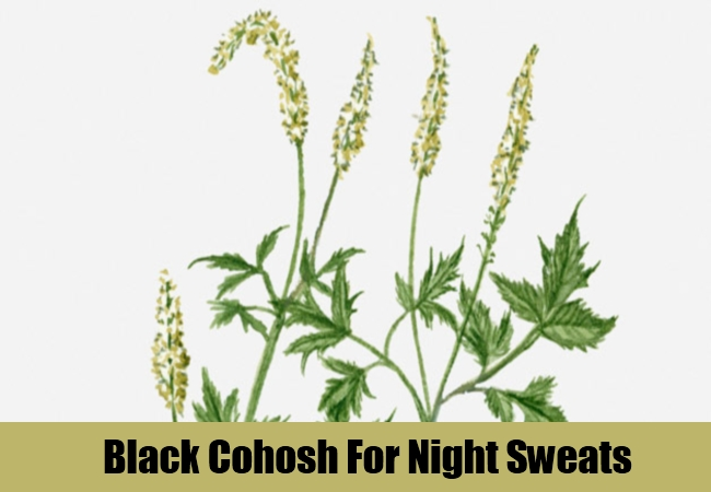 Black Cohosh For Night Sweats
