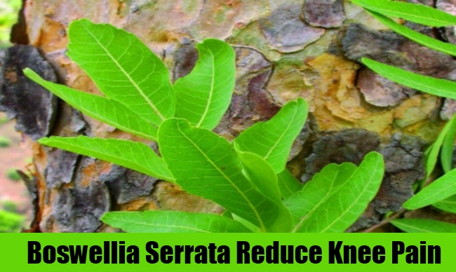 Boswellia Serrata Reduce Knee Pain