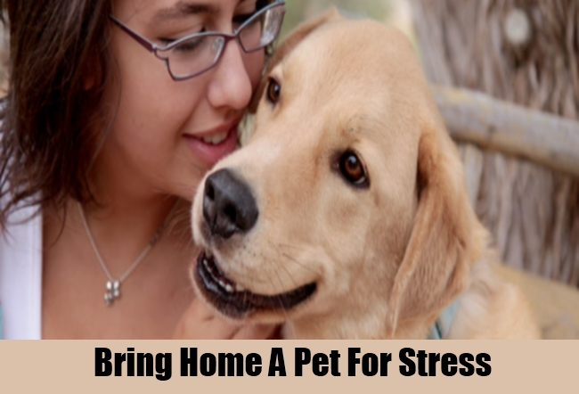 Bring Home A Pet For Stress