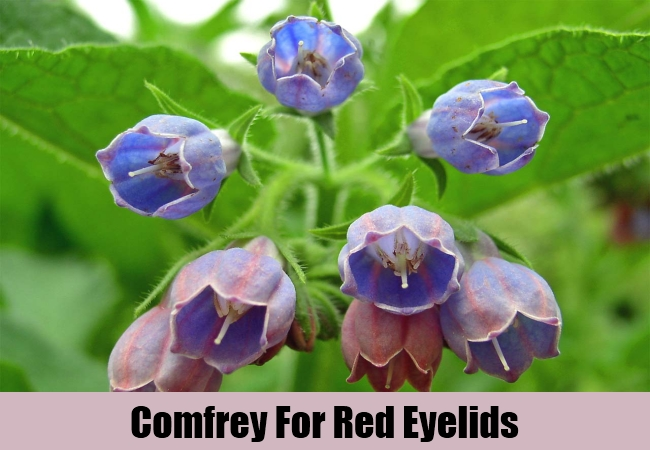 Comfrey For Red Eyelids