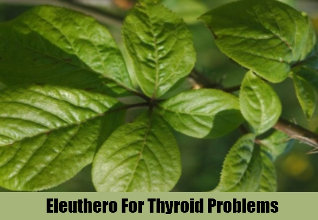 Eleuthero For Thyroid Problems