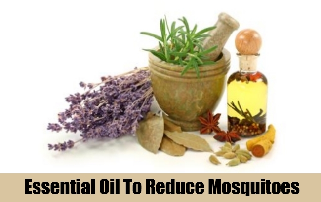 Essential Oil To Reduce Mosquitoes