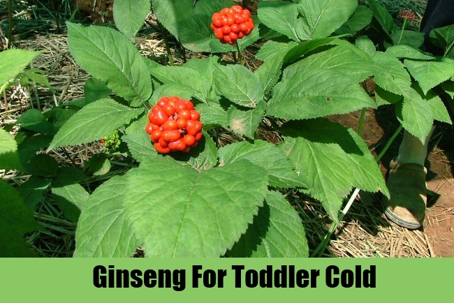 Ginseng For Toddler Cold