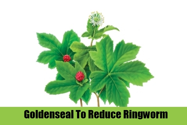 Goldenseal To Reduce Ringworm