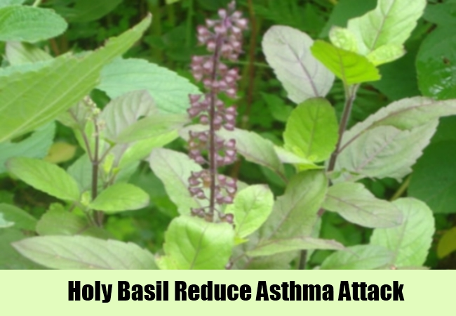 Holy Basil Reduce Asthma Attack