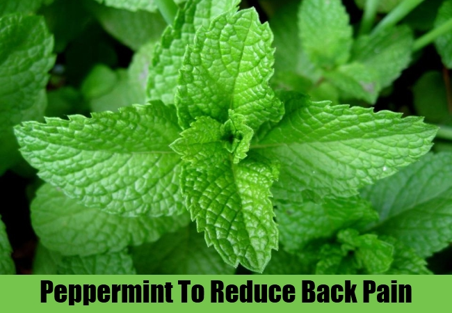 Peppermint To Reduce Back Pain