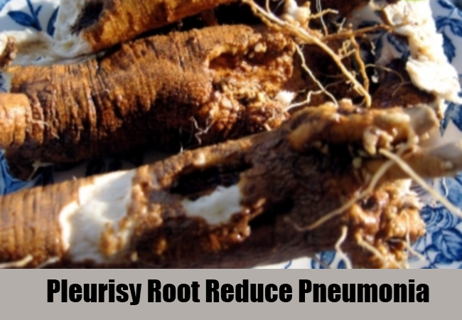 Pleurisy Root Reduce Pneumonia