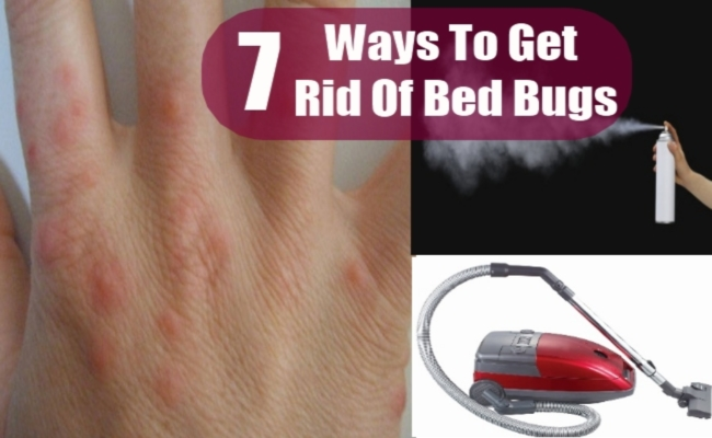 Herbs That Get Rid Of Bed Bugs