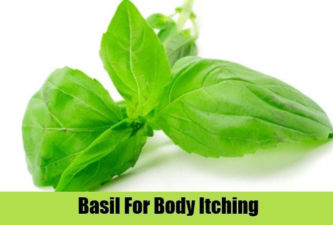 Basil For Body Itching