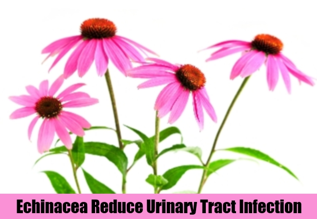 Echinacea Reduce Urinary Tract Infection