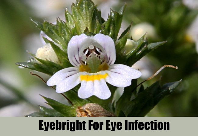 Eyebright For Eye Infection