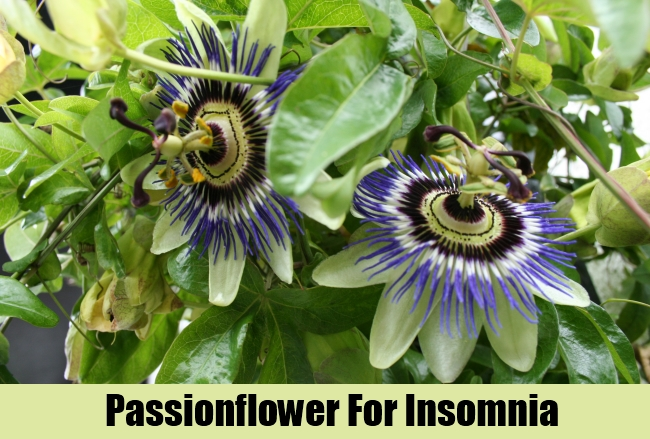 Passionflower For Insomnia