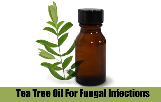 Tea Tree Oil For Fungal Infections