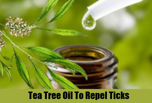 Effective and useful home remedies to repel ticks best tips herbal supplements - Home remedies to keep fleas away ...