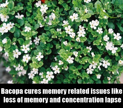 Do supplements improve memory photo 6