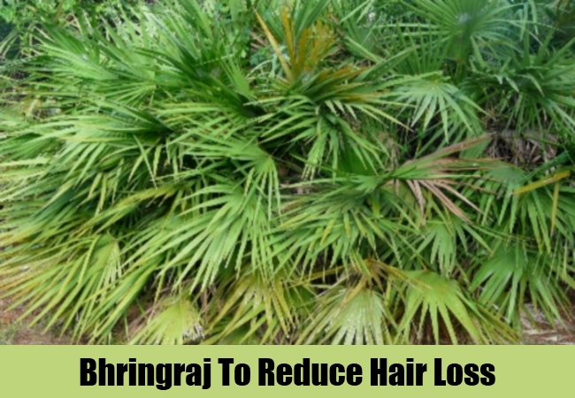 Bhringraj To Reduce Hair Loss