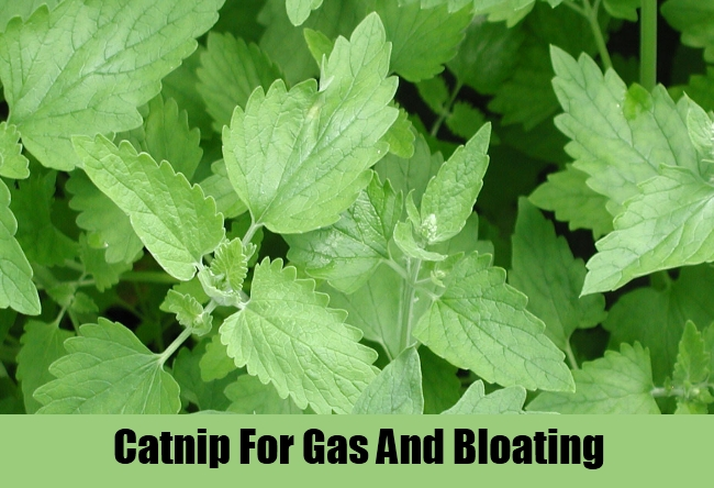 Catnip For Gas And Bloating