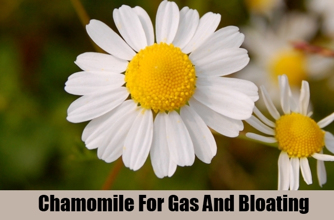 Chamomile For Gas And Bloating