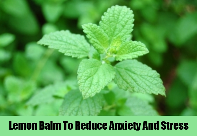 Lemon Balm To Reduce Anxiety And Stress