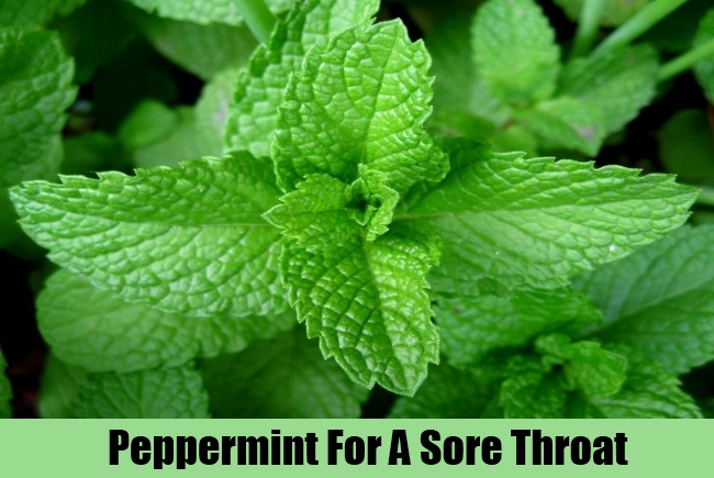 Peppermint For A Sore Throat