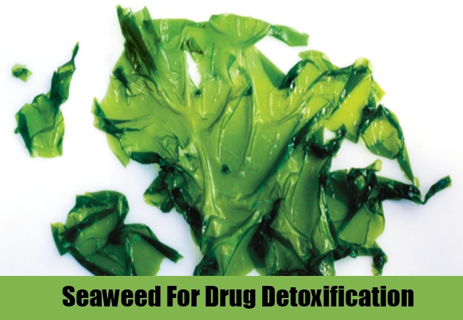 Seaweed For Drug Detoxification