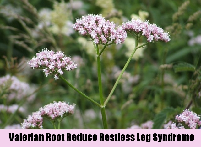 Valerian Root Reduce Restless Leg Syndrome