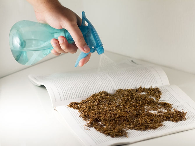 Wet Tobacco For Insect Bite