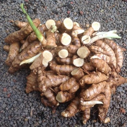 buy curcuma angustifolia