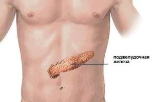 Where is the pancreas in humans